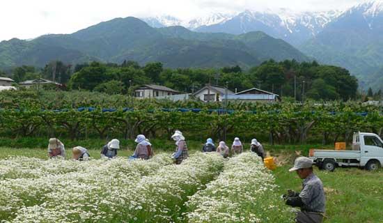 長野ハーブ農園