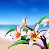 ハワイ花ビーチ