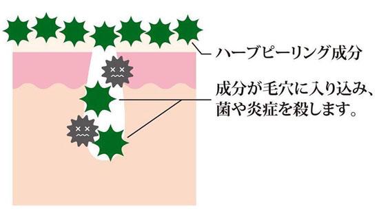 ハーブ成分のイメージ