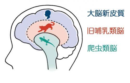 人の脳の構造