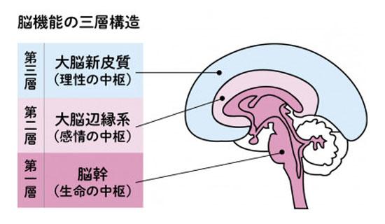 脳の3層構造