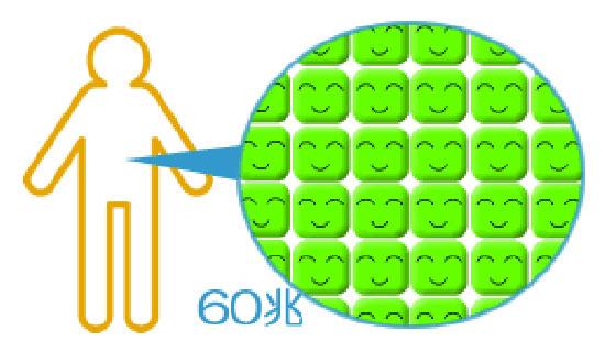 身体に60丁個の細胞